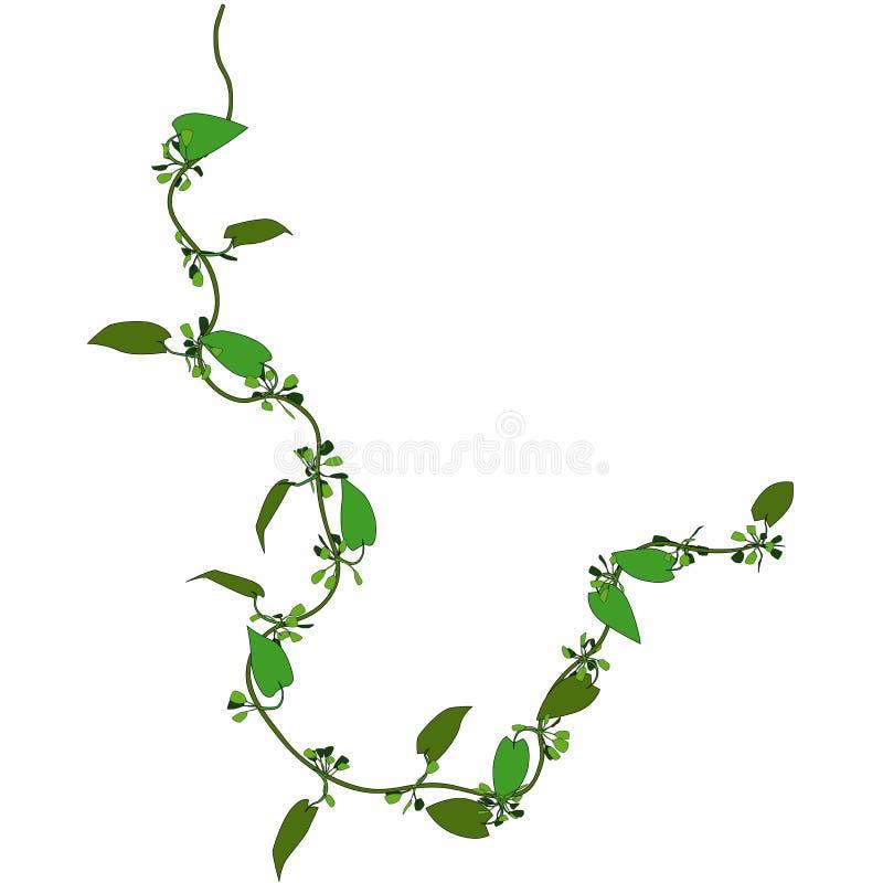 Kriechpflanze 3 stock abbildung
