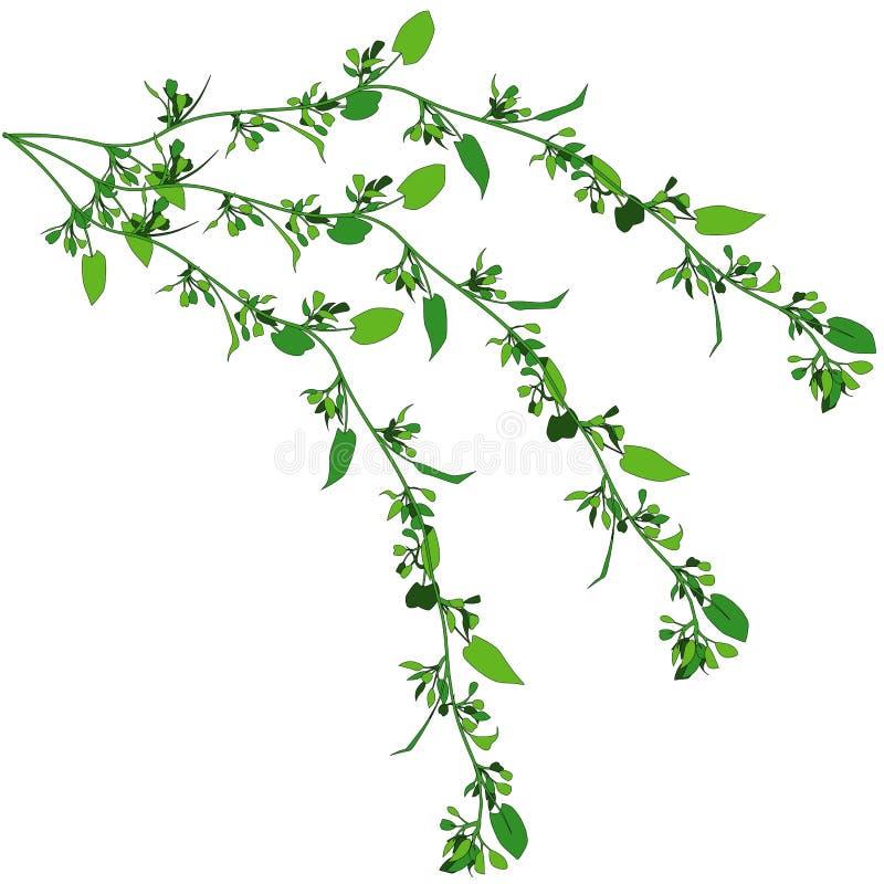 Kriechpflanze 5 lizenzfreie abbildung