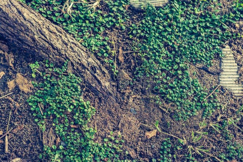 Kriechpflanze im Garten stockfoto