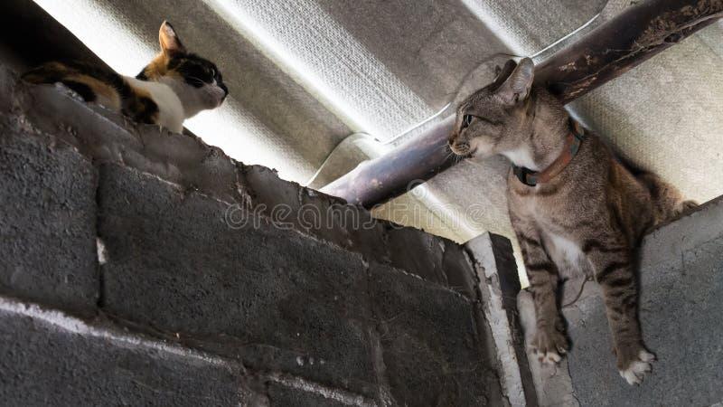 Krieg von Katzen in der Wand lizenzfreies stockfoto