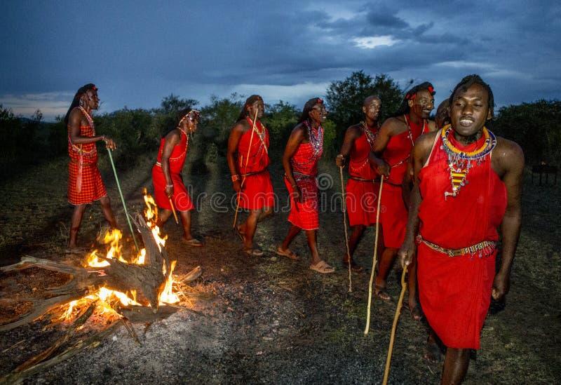 Krigare Masaistammen som sent dansar rituell dans runt om branden i aftonen fotografering för bildbyråer