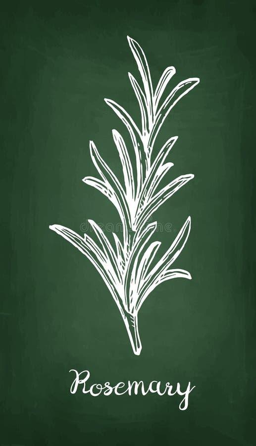 Krijtschets van rozemarijn stock illustratie