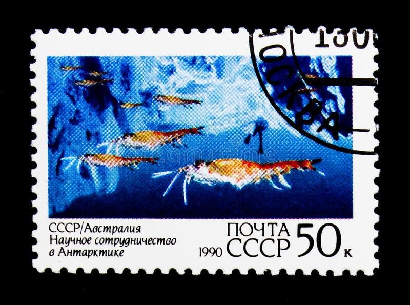 Krill badanie, złącza zagadnienie USSR i Australia, Antarktyczny gruch obrazy stock