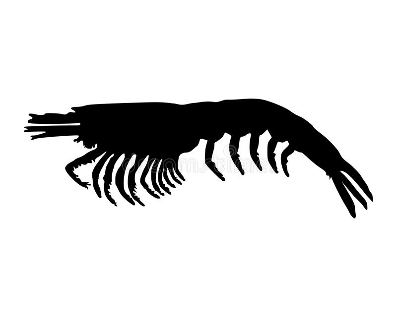 Krill na bielu ilustracji