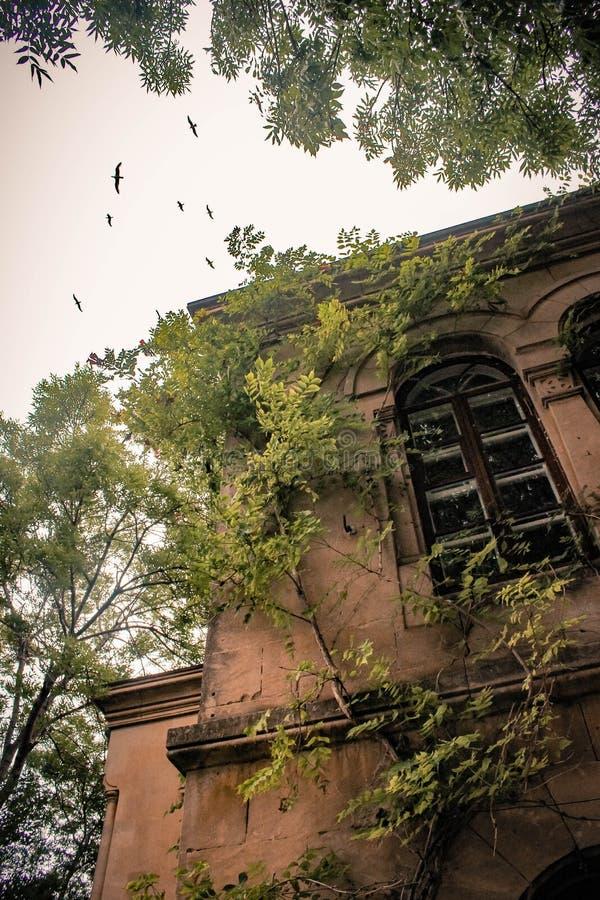 Krim - Vögel im Himmel stockbild