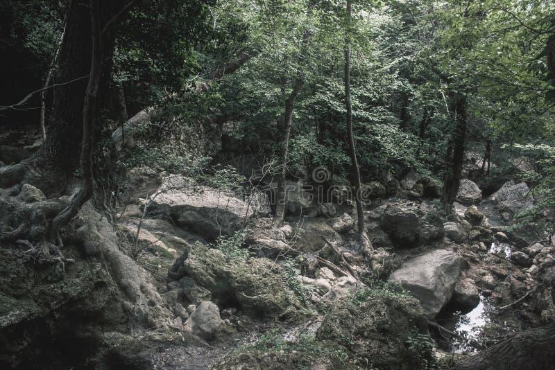 Krim - Wald lizenzfreie stockfotografie