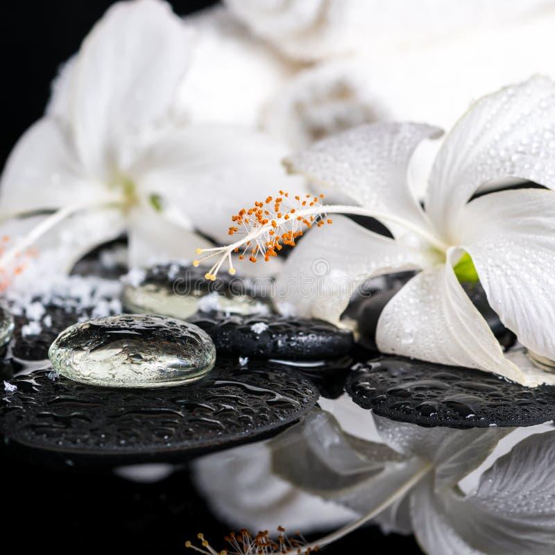 Kriogeniczny zdroju pojęcie delikatny biały poślubnik, zen dryluje dowcip fotografia stock
