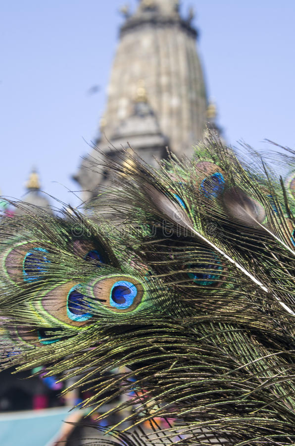Krishna and Peacock Feathers. It is said that Lord Krishna of Hindu Religion used to put Peacock feather on his head as a symbol of purity, as peacocks do not royalty free stock photography