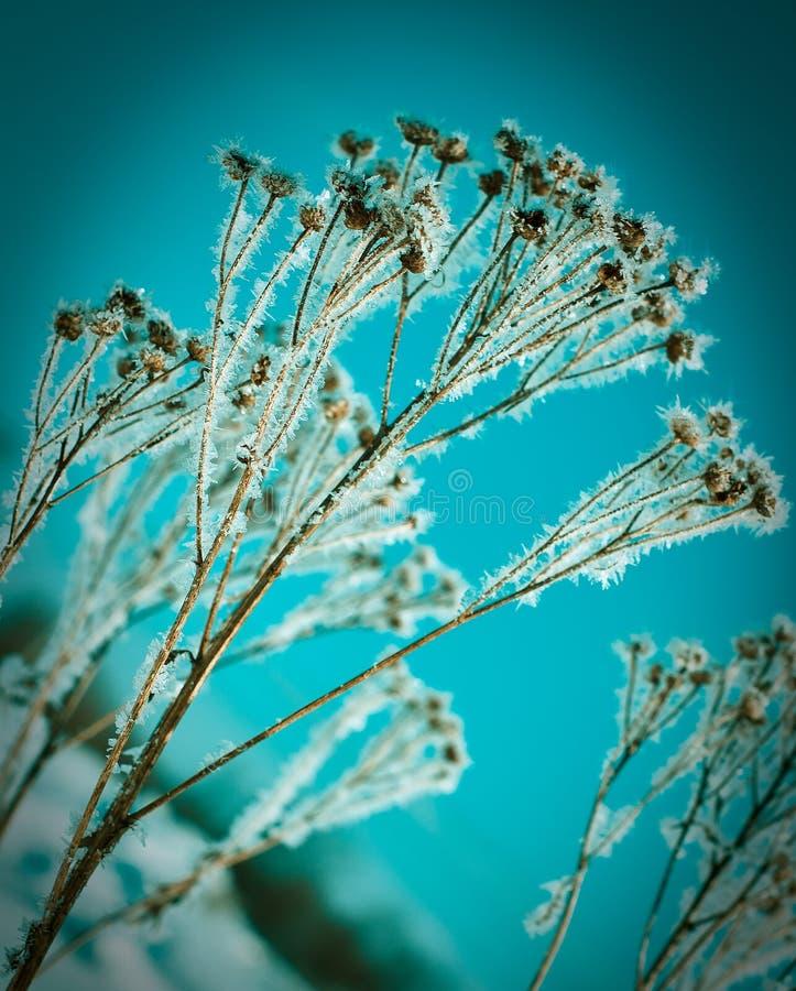 Kristal sneeuw-bloemen stock foto's