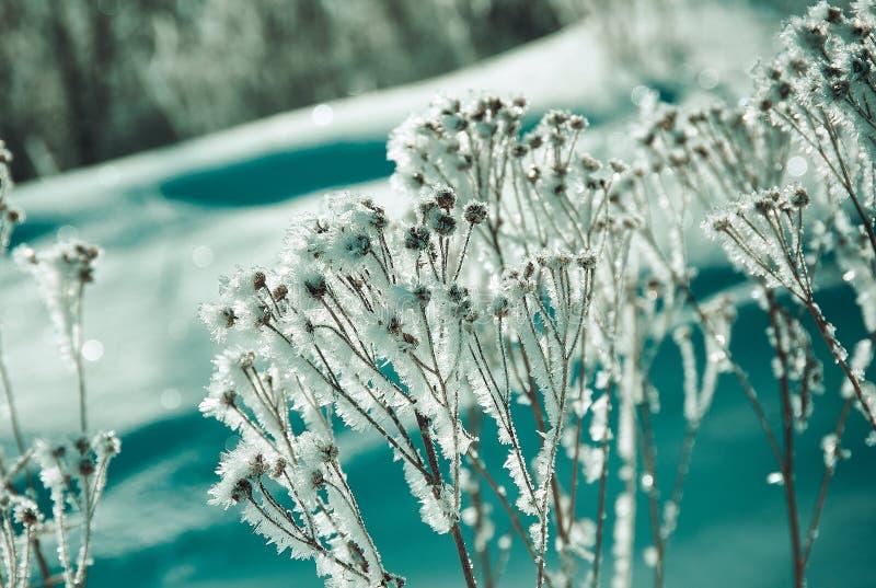 Kristal sneeuw-bloemen royalty-vrije stock foto's