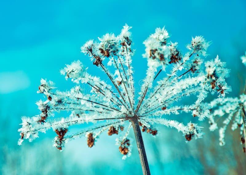 Kristal sneeuw-bloemen royalty-vrije stock fotografie