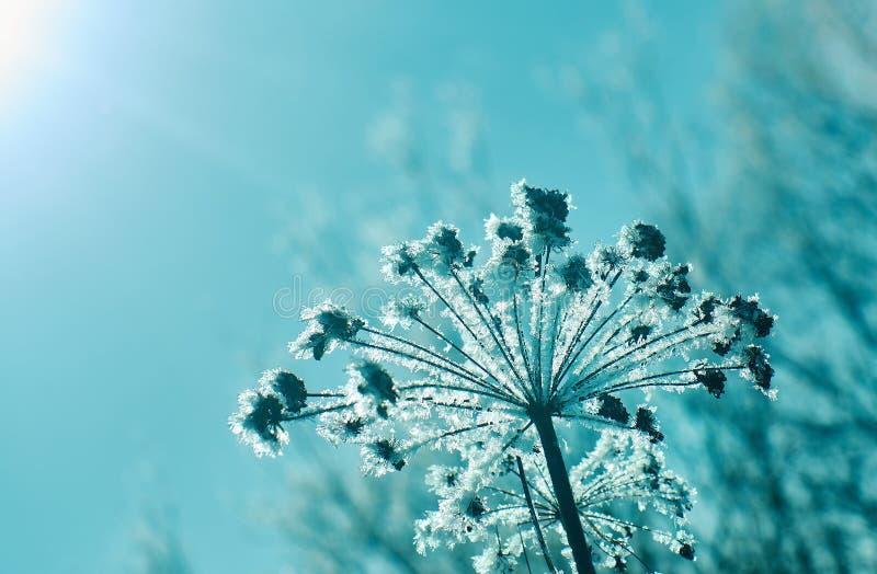 Kristal sneeuw-bloemen royalty-vrije stock foto