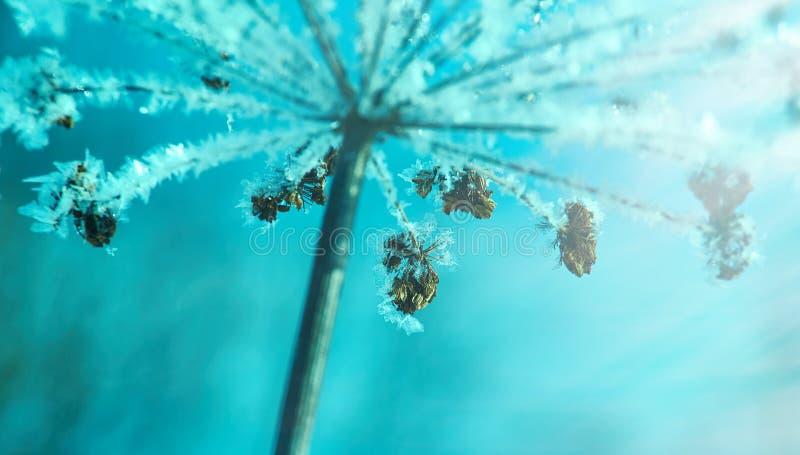 Kristal sneeuw-bloemen stock foto