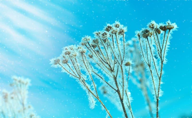 Kristal sneeuw-bloemen stock afbeelding
