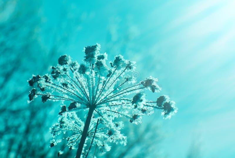 Kristal sneeuw-bloemen royalty-vrije stock afbeeldingen