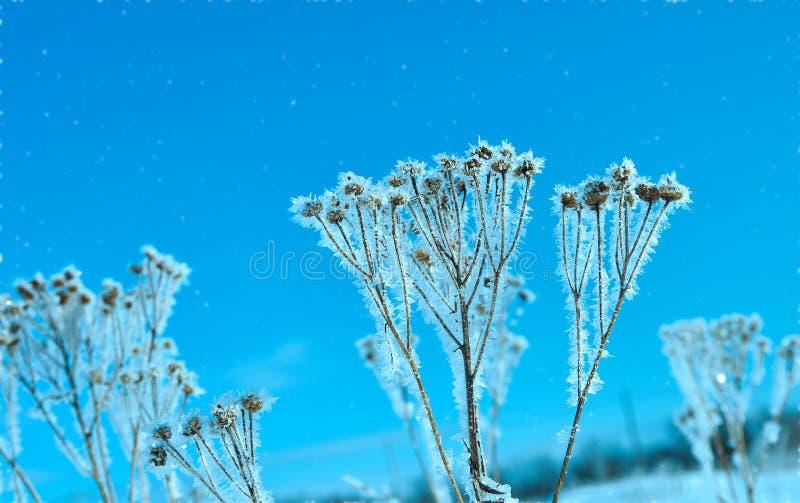 Kristal sneeuw-bloemen stock afbeeldingen