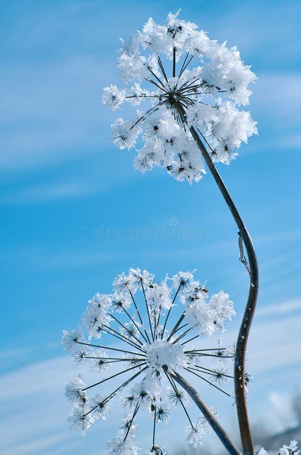 Kristal sneeuw-bloemen tegen de blauwe hemel royalty-vrije stock afbeeldingen