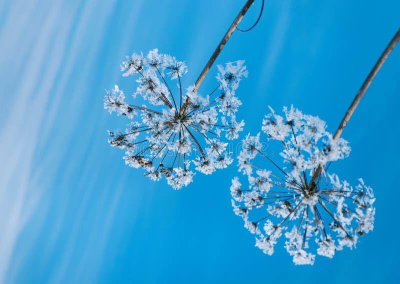 Kristal sneeuw-bloemen tegen de blauwe hemel stock foto