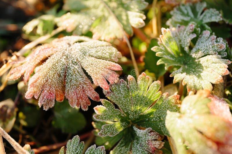 Kristaller av is på vårgräset, rimfrost royaltyfri fotografi