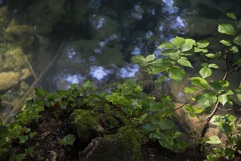 Kristallijn water, Groen blad in diep bos met rivier dichtbij, moos op de rotsen royalty-vrije stock afbeeldingen