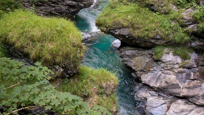 Kristallklar blå flod med botaniskt på flodsidan royaltyfri fotografi