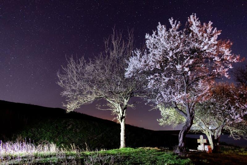 Kristallklar himmel och stj?rnor ?ver att blomma tr?d royaltyfri bild
