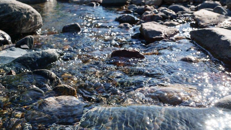 Kristallklart vatten av den lilla bäcken i den Altai stäppen royaltyfri fotografi