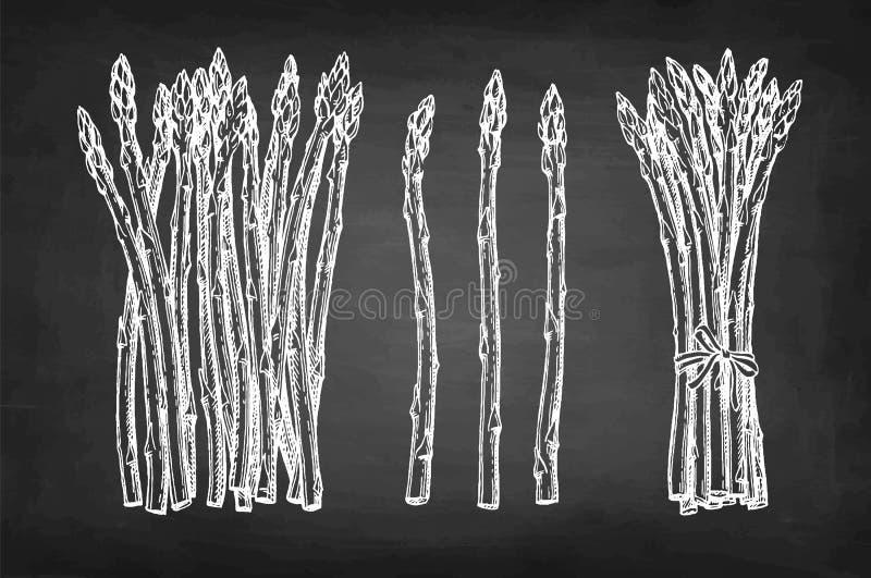 Krita skissar av sparris stock illustrationer