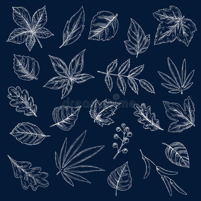 Kritateckningar av trädsidor och frö vektor illustrationer