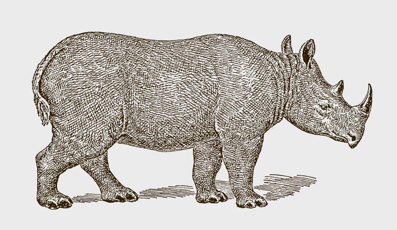 Kritisch vom Aussterben bedrohtes schwarzes oder hakengeliebtes Nashornbicornis (Rhinoceros diceros bicornis) in Seitenansicht vektor abbildung