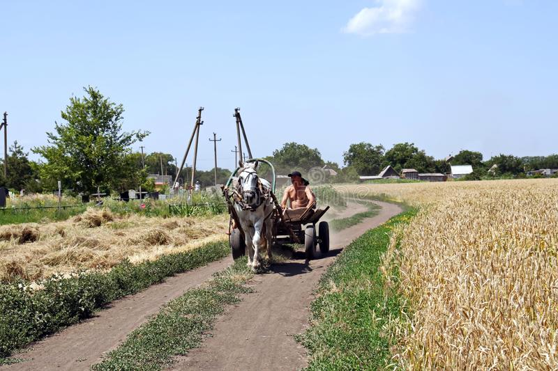 A farmer with his family rules the carriage with a horse riding a rural road along a wheat field. royalty free stock photo