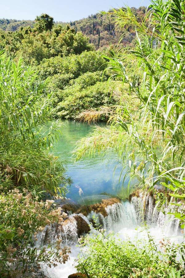 Krka, Sibenik, Chorwacja - Wodna płocha przy małą siklawą wśród Krka parka narodowego zdjęcia royalty free