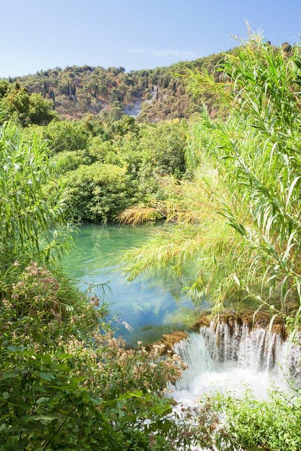 Krka, Sibenik, Croatia - Water reed at a small downfall within Krka National Park. Krka, Sibenik, Croatia, Europe - Water reed at a small downfall within Krka royalty free stock images