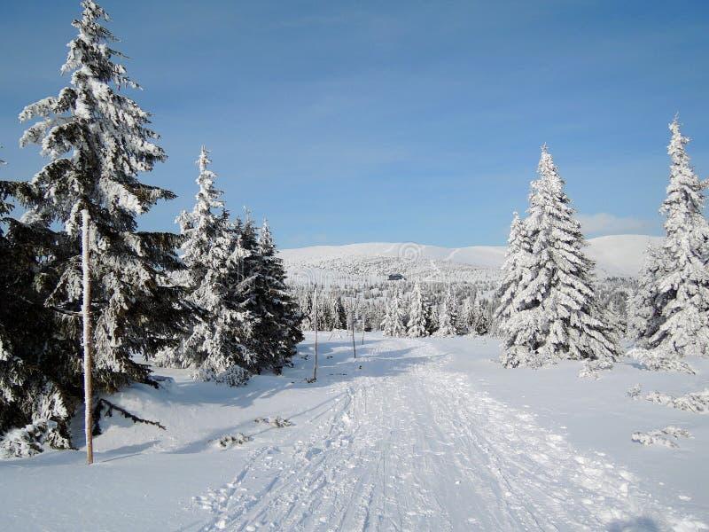 KrkonoÅ-¡ e Berge - Skifahrenweg lizenzfreie stockbilder