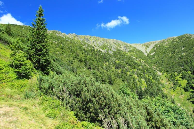 Download Krkonose góry obraz stock. Obraz złożonej z natura, republika - 57674835