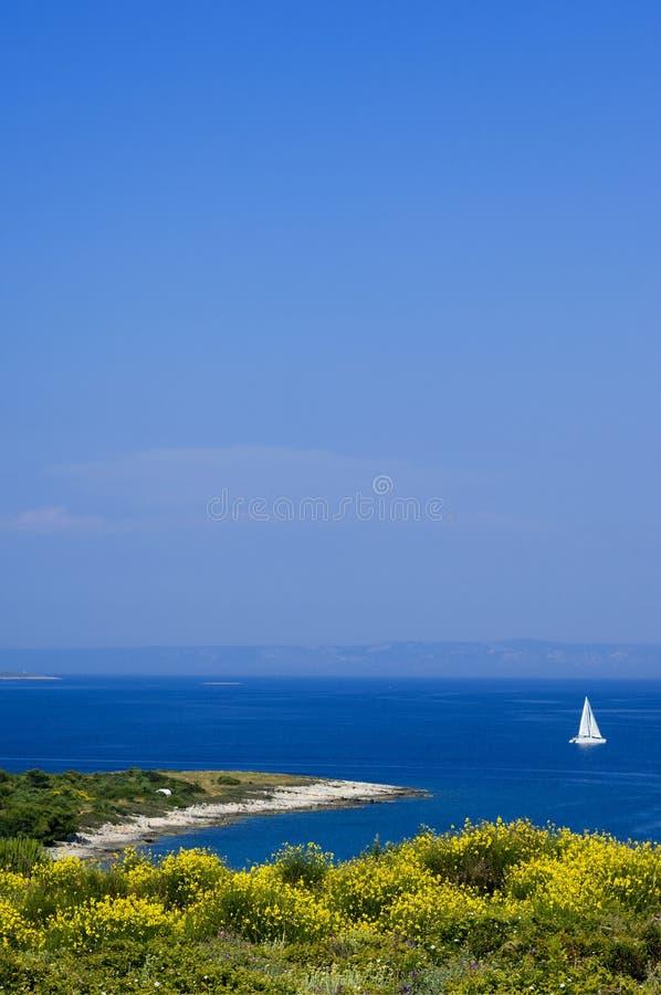 Kroatië dat - in Istria bloeit stock foto