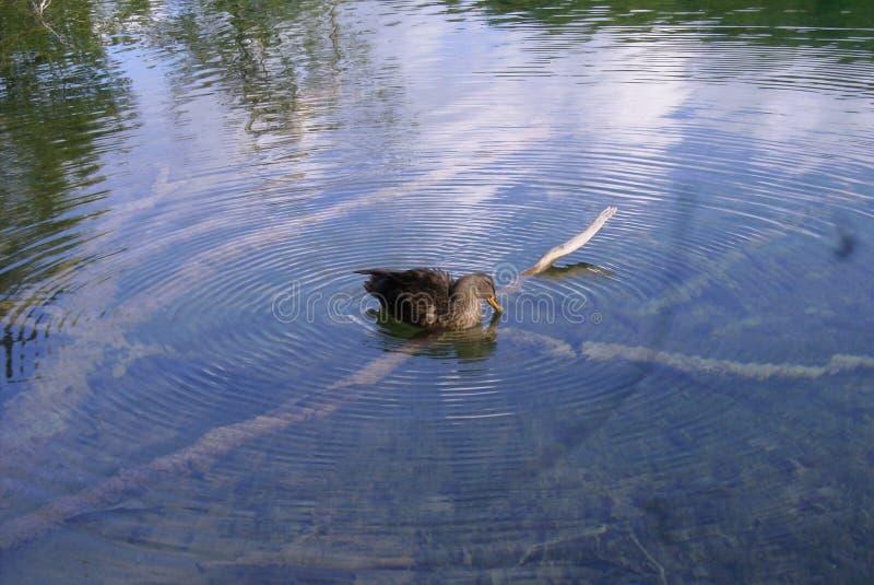 Kroatië-Plitvice Meren Nationaal Park stock fotografie