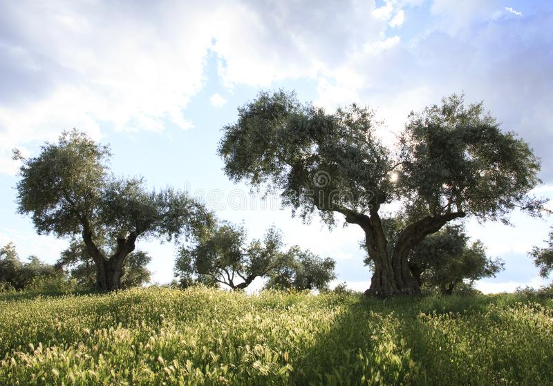 Kroatien-Insel Krk Spanien-Landschaft stockfotos