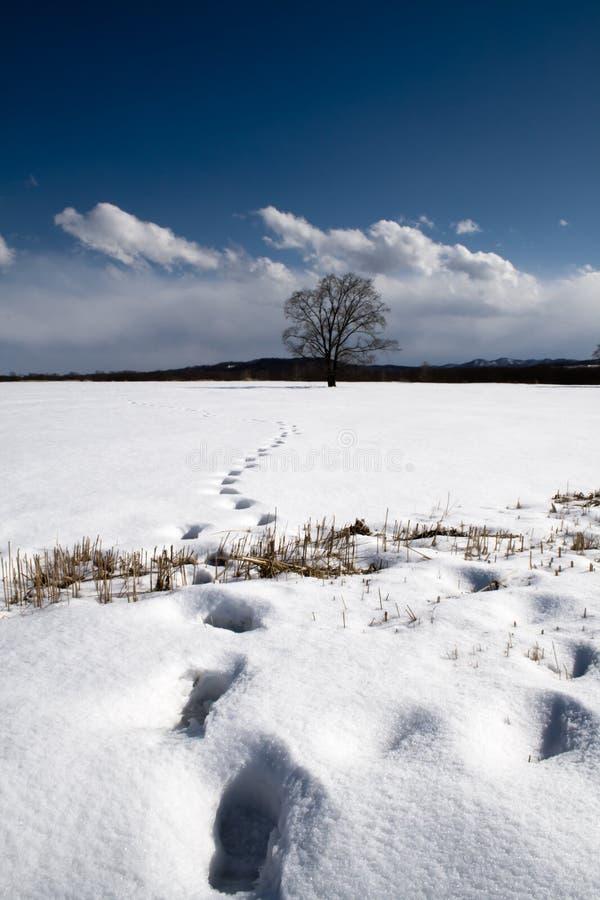 kroków drzewa zima obraz stock