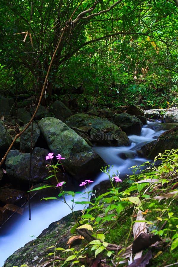 Download Krok Ja Dok Siklawa, Tajlandia Zdjęcie Stock - Obraz złożonej z świeżość, ulistnienie: 41950722