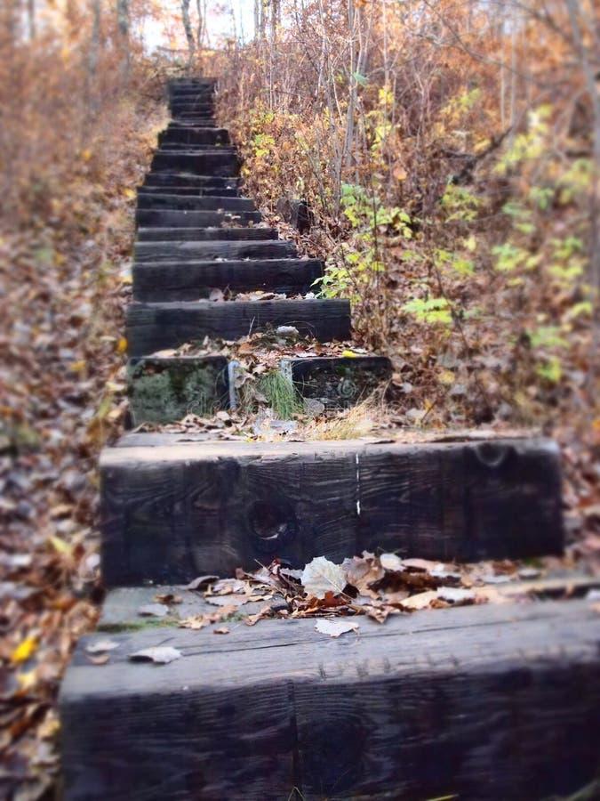 Kroki prowadzi gdzieś w drewnach obrazy stock