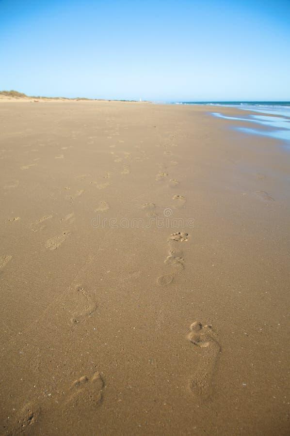 Kroki przy dłoniową plażą zdjęcie stock