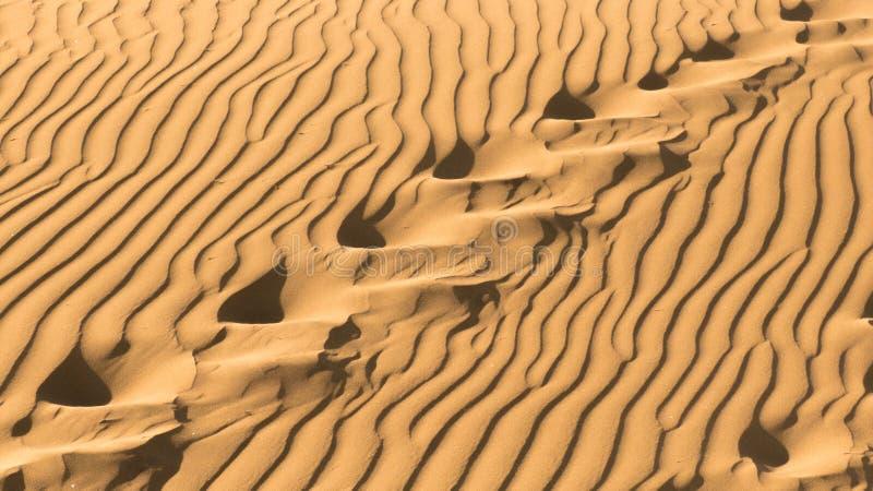 Kroki w piasku obrazy royalty free