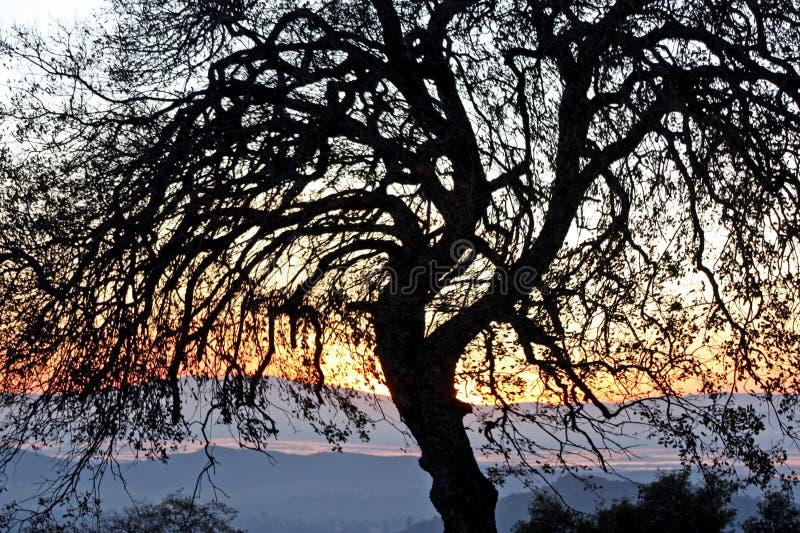 krokig tree royaltyfri foto