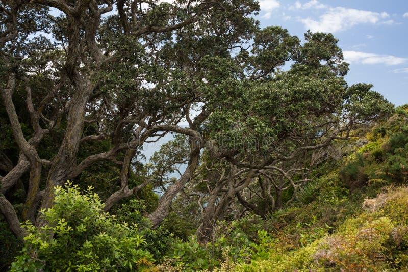 krokiga trees arkivbild