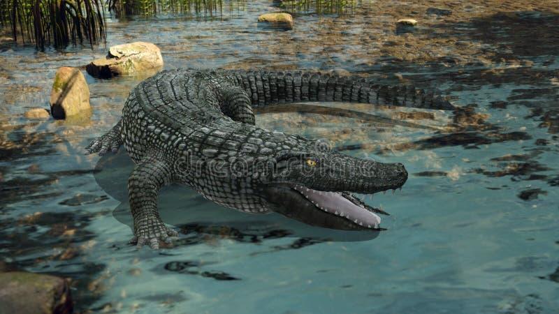 krokodil royalty-vrije stock afbeeldingen