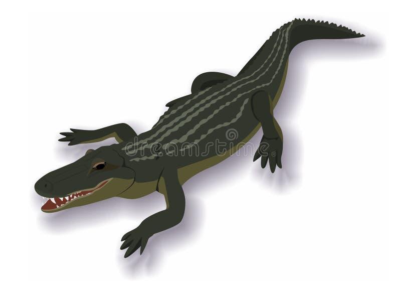 Krokodil vector illustratie