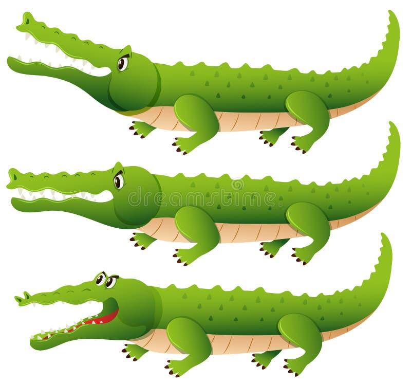 Krokodil in drie verschillende acties vector illustratie