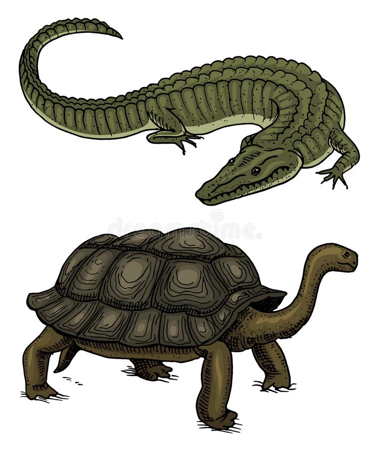 Krokodil och sköldpadda Älsklings- reptilar och amfibier och tropiskt djur den inristade handen som dras i gammal tappning, skiss vektor illustrationer