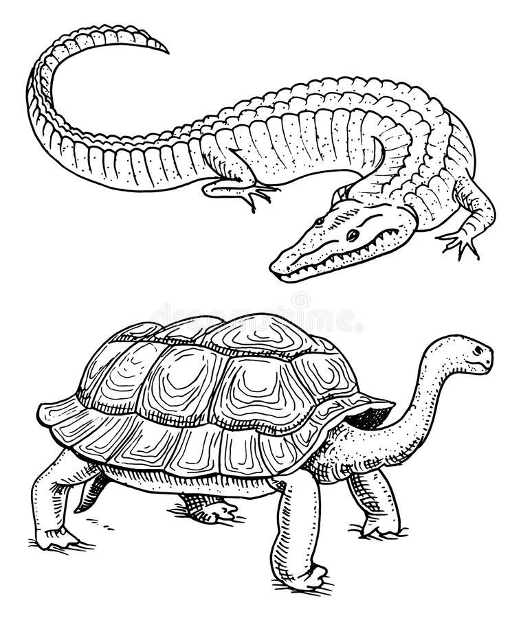 Krokodil och sköldpadda Älsklings- reptilar och amfibier och tropiskt djur den inristade handen som dras i gammal tappning, skiss stock illustrationer